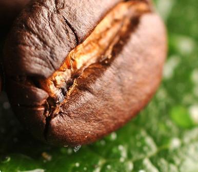 تفاوت قهوه روبوستا و قهوه عربیکا