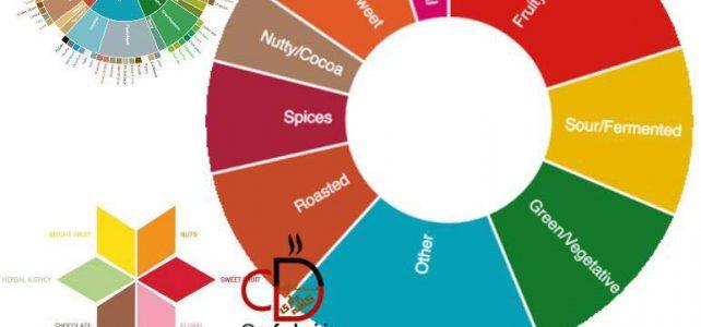 چرخه طعمی قهوه چیست – طعم های قهوه