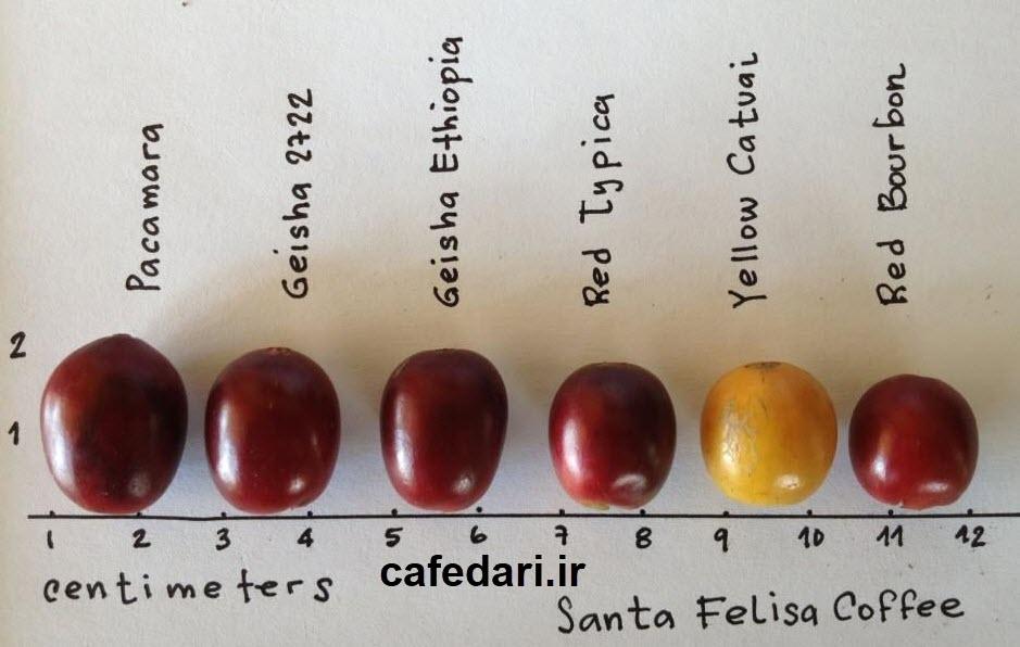 انواع ورایتی قهوه
