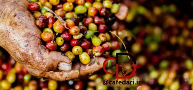 قهوه سینگل اورجین